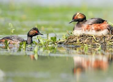 Spring Birding in Bulgaria