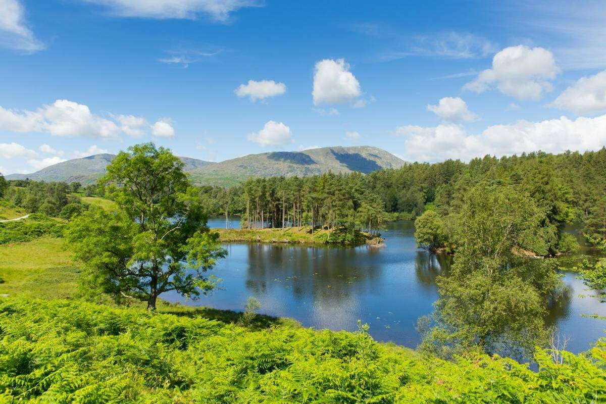 Coniston - Local Area - Tarn Hows - AdobeStock_67675606.jpeg