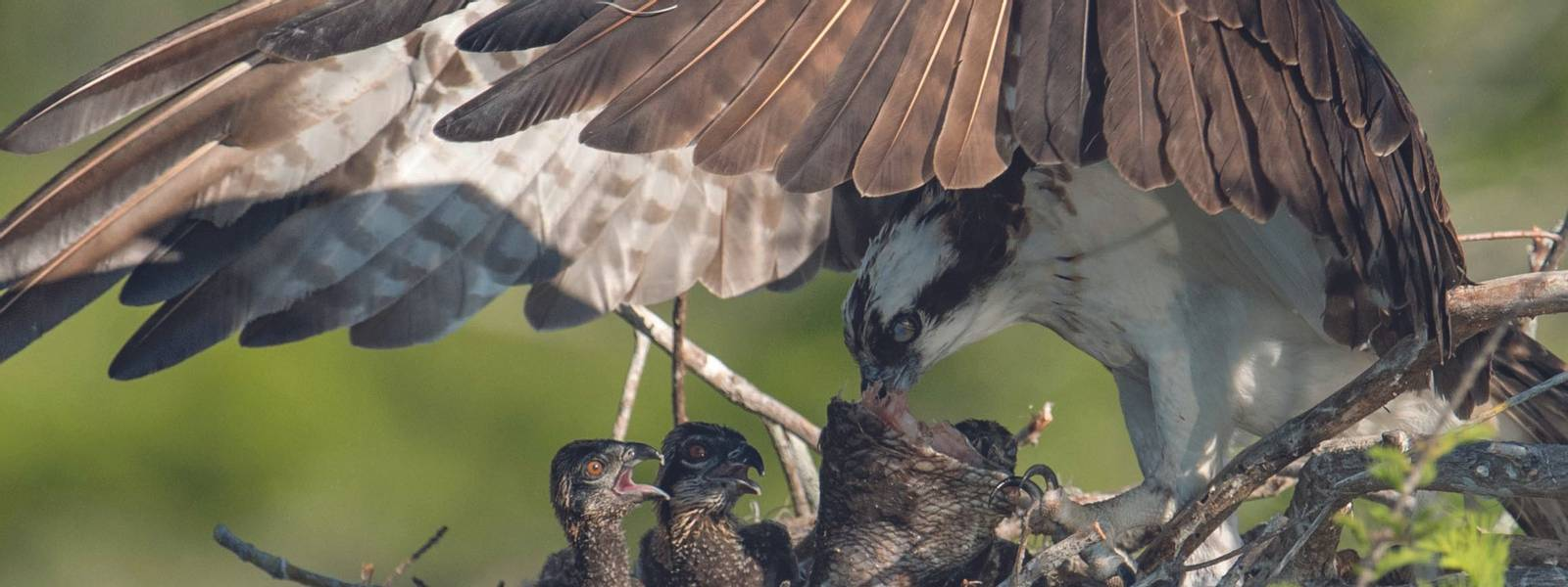 Wildlife - Explore Nature - AdobeStock_203852810 (1).jpeg