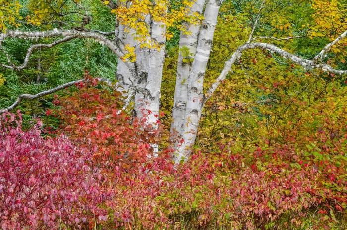 Fall colour, Canada shutterstock_1388981792.jpg