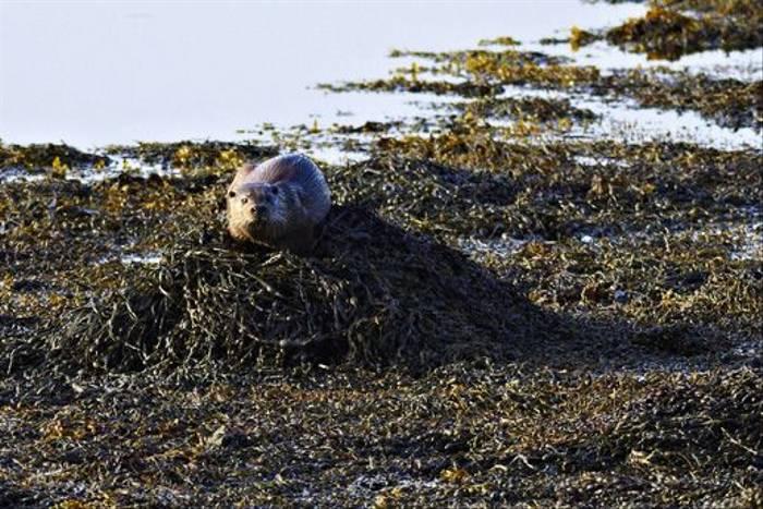 Otter (Derek Mills)