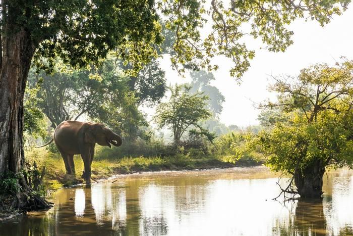 Elephant, Sri Lanka Shutterstock 1106909417