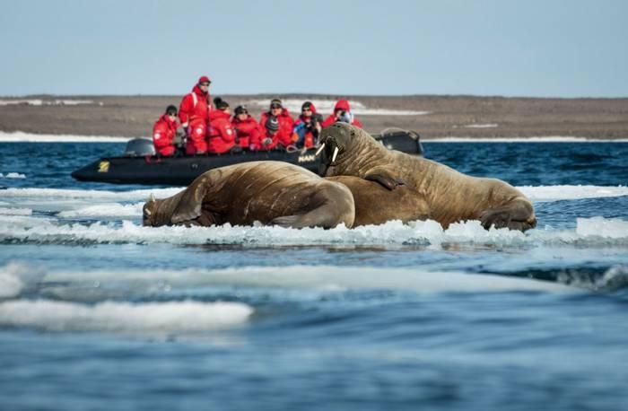 Walruses © Anthony Smith (9).jpg
