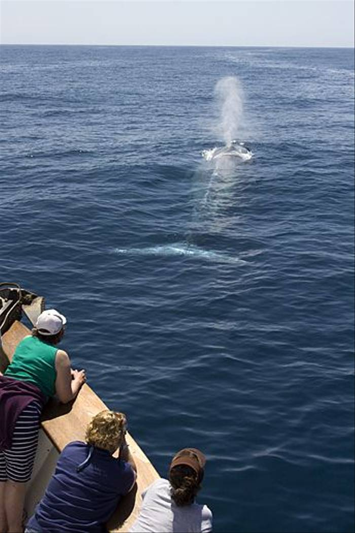 Blue Whale encounter (Lee Morgan)