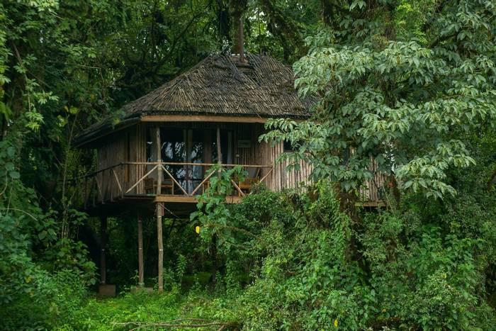 Bale Mts Lodge Tree House