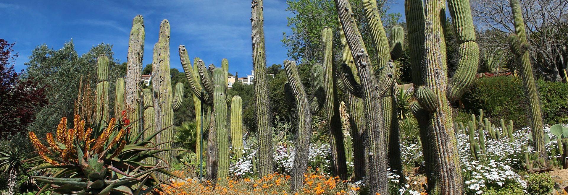 Botanical garden Pinya de Rosa in Costa Brava. Blanes. Catalonia.
