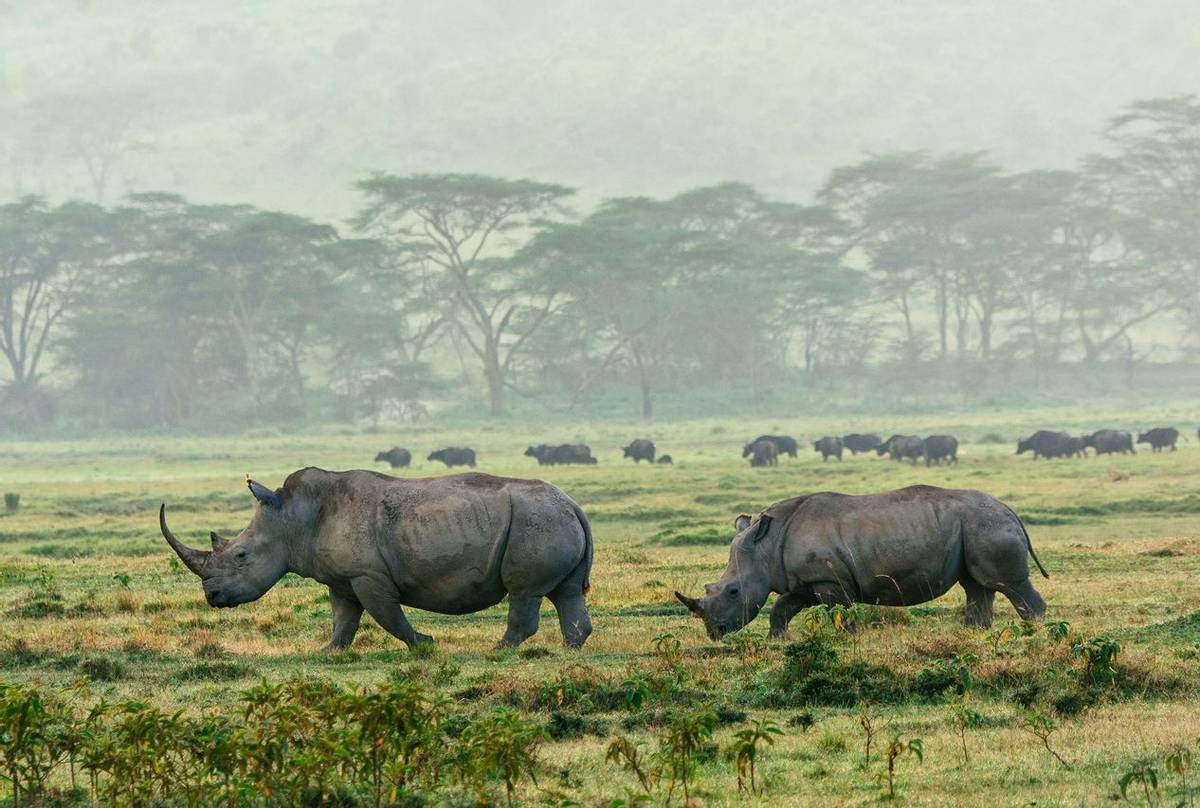 White Rhino, Lake Nakuru, Kenya Shutterstock 166069652