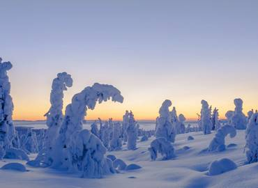 Northern Lights and Wildlife in Swedish Lapland