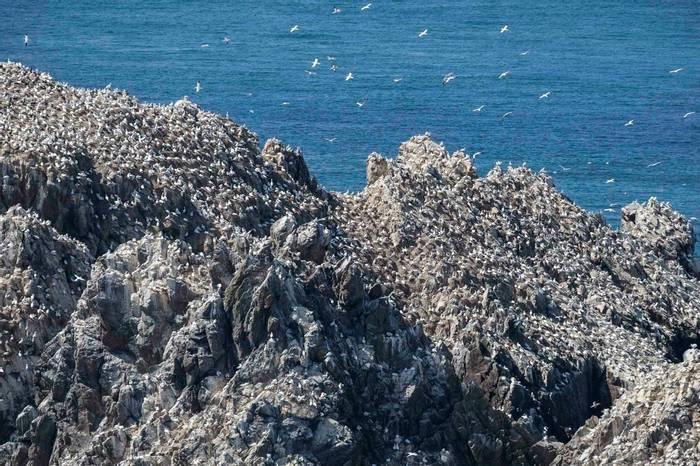 Gannet Rock, Alderney Shutterstock 786517642