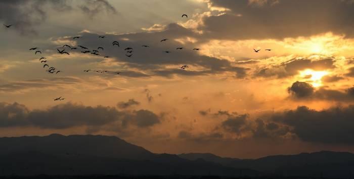 Cranes Kyushu