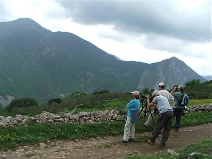 Scanning the mountainside (Thomas Mills)