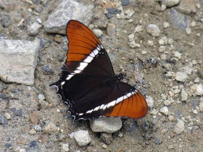 Butterfly (Steve Wakeham)