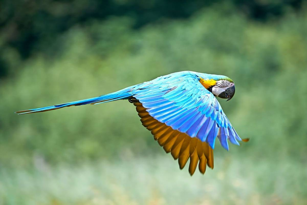 Blue And Yellow Macaw Shutterstock 207036775