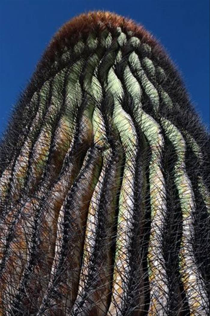 The Giant Barrel Cactus (lee Morgan)