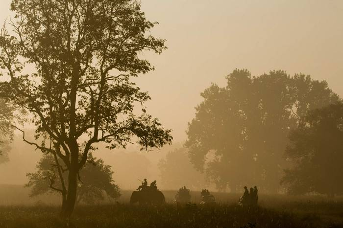 Early Morning Tiger Tracking in Kanha (copyright Dani Free)