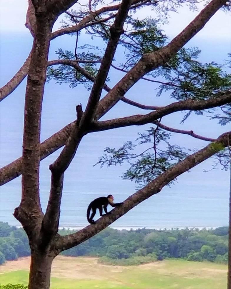 lapazul-retreat-monkey-tree.jpg