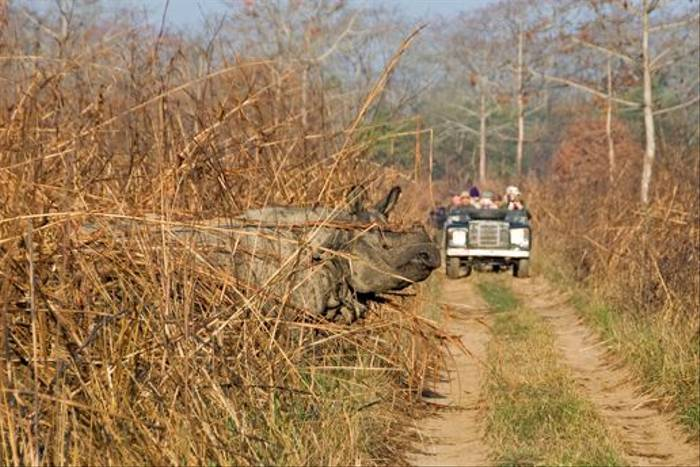 Rhino crossing the track! (Paul Stanbury)