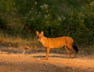 Not Just Tigers! Satpura - Best of Central India