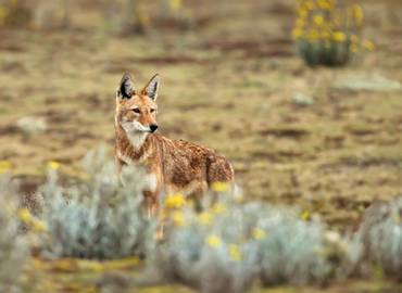 Ethiopia - Wildlife and History