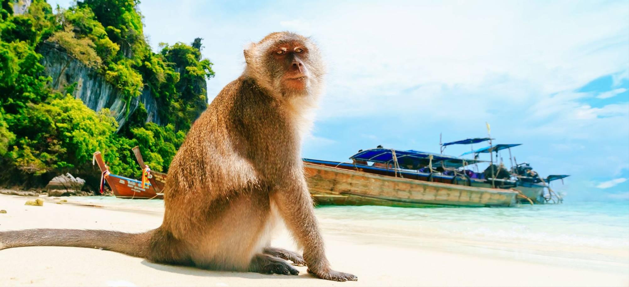 Phi Phi - Monkey beach - Itinerary Desktop .jpg