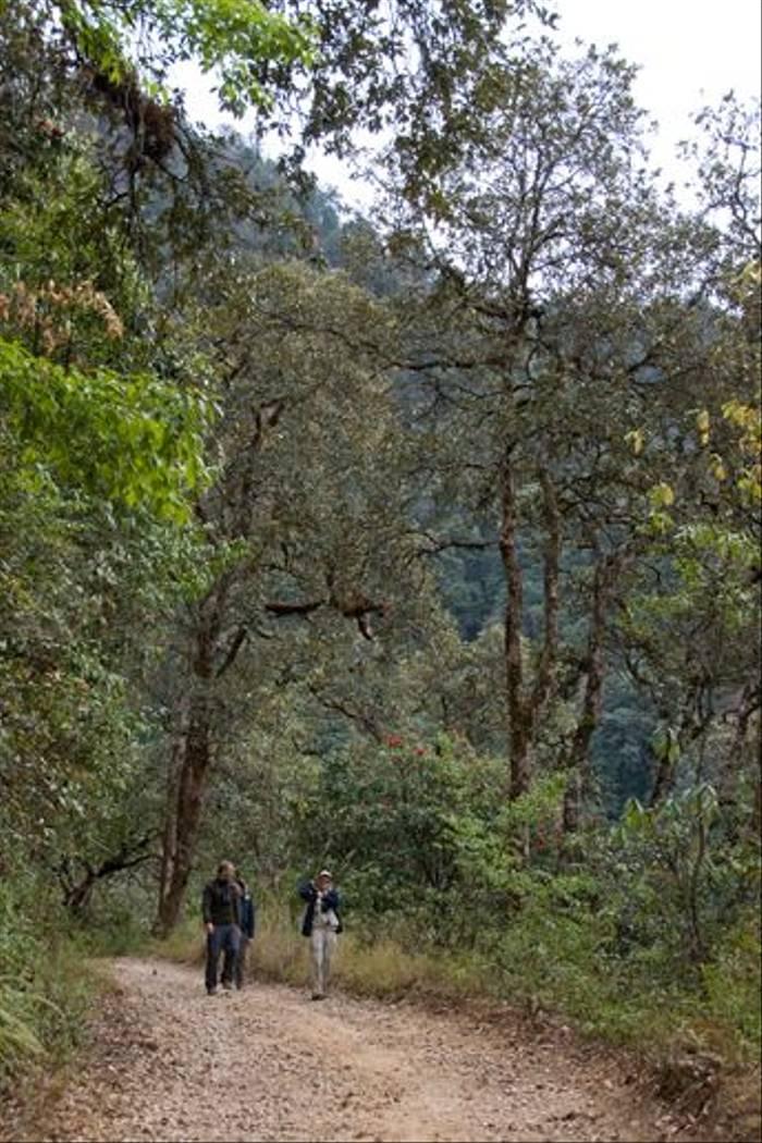 Walking on Phulchowki, Kathmandu (Paul Stanbury)