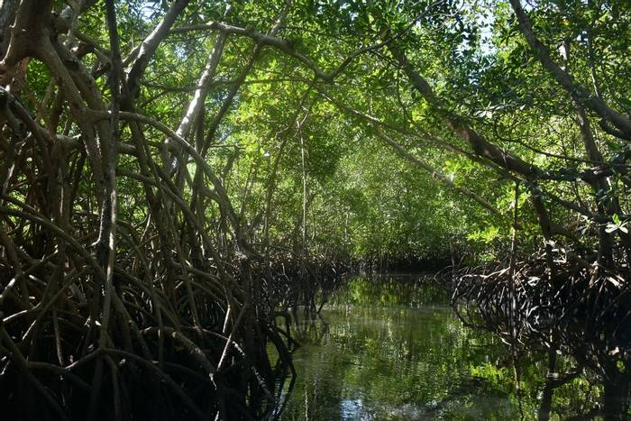 Sine Saloum Delta mangroves, Senegal shutterstock_1294732117.jpg