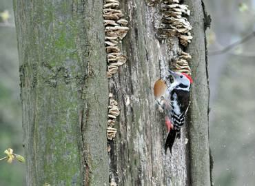 The Czech Republic - Spring Birding in Bohemia