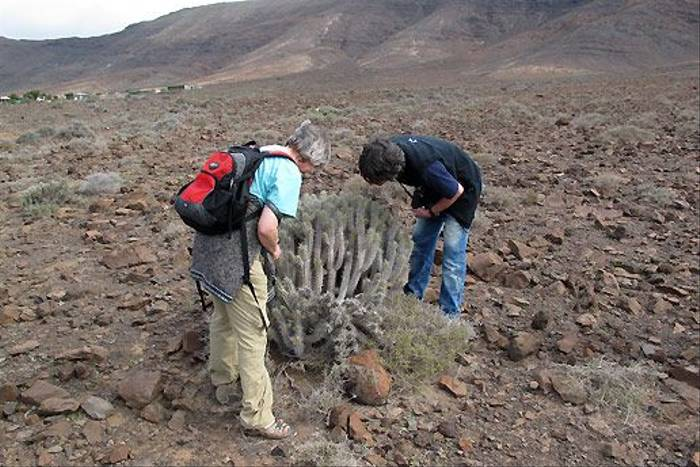Admiring Euphorbia canariensis (Paul Harmes)