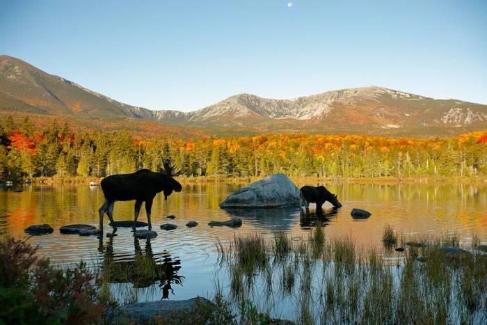 Moose, Maine, USA shutterstock_1023202522.jpg