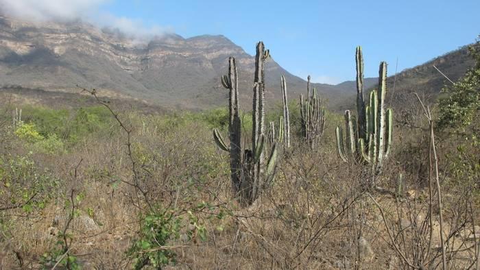 Cacti (Andrew Lapworth).jpg
