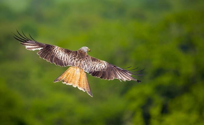 Brecon Beacons - Wildlife - AdobeStock_93412753.jpeg