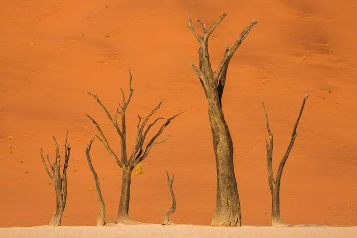Dead Vlei, Namib Naukluft National Park © R Harvey