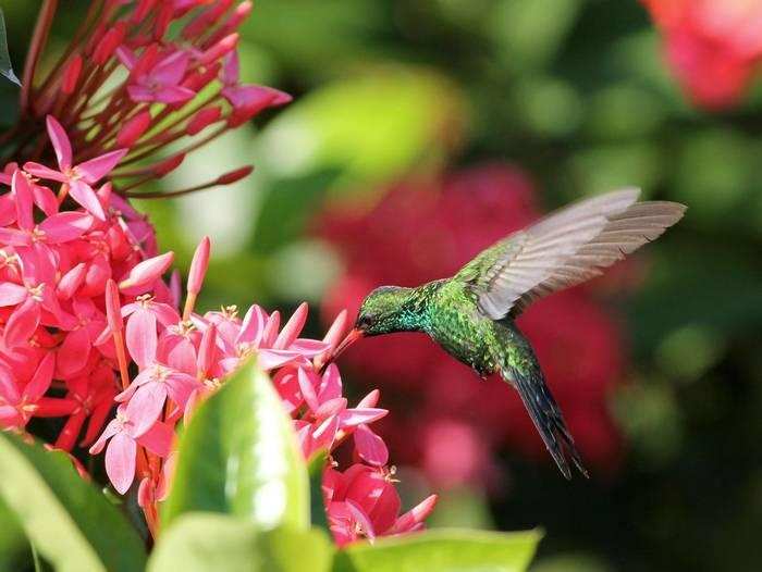 Canivet's Emerald Costa Rica shutterstock_134654600.jpg