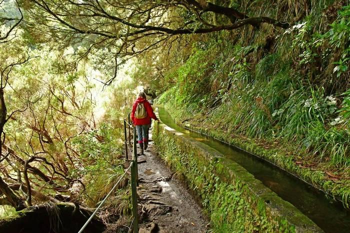 Levada, Madeira Shutterstock 1183897534