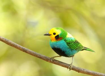 Colombia - Birds & History