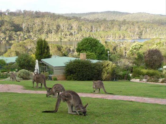 Grey Kangaroos (Janine Duffy)