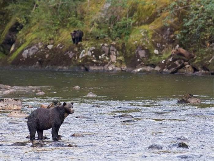 Great Bear Rainforest (Paul Marshall)