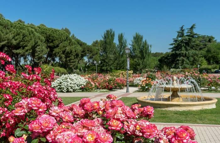 Madrid Botanical Gardens shutterstock_551474878.jpg