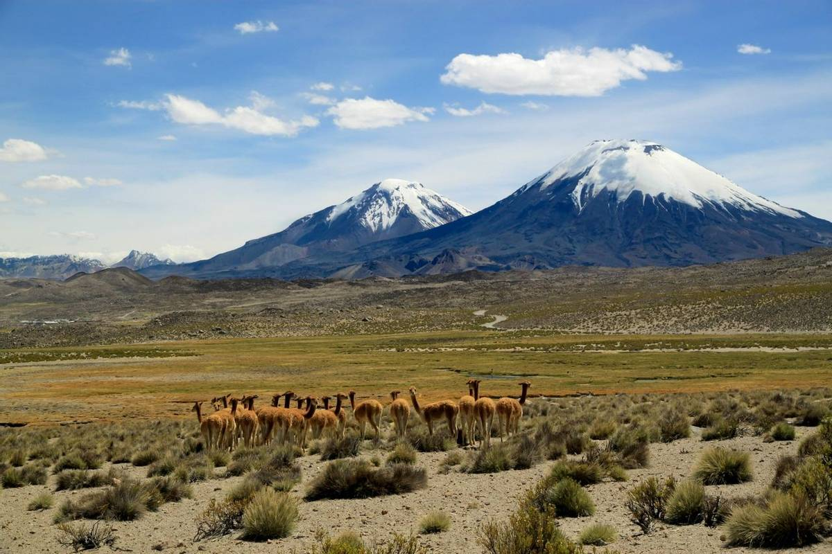 Payachata volcanic group at Lauca National Park, Chile