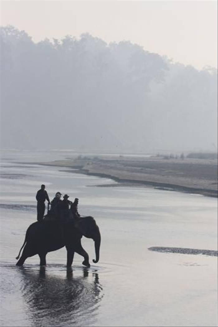 Elephant safari at sunrise, Chitwan (Cliff Garratt)