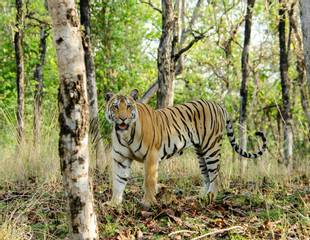 Unknown India - Tadoba & Satpura