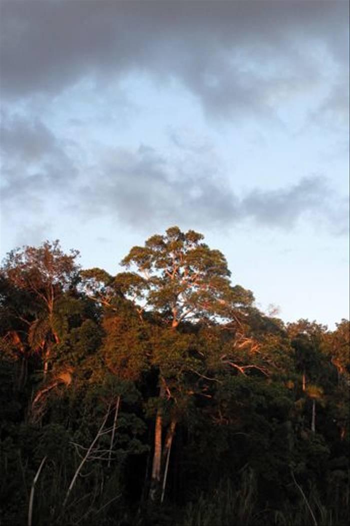 Amazonian Rainforest (Kiera Griffin)