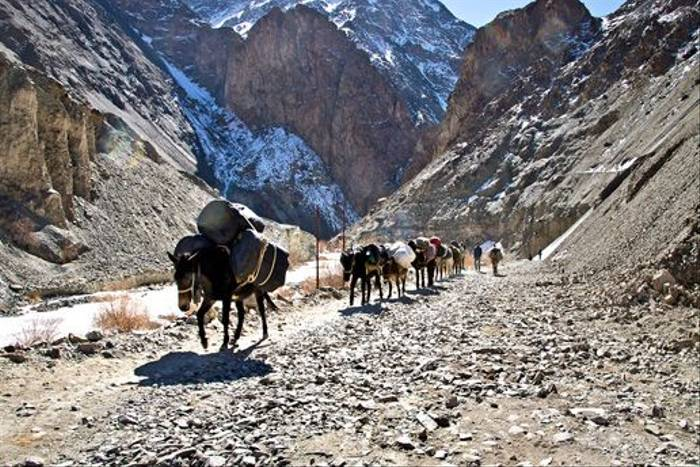 Horses exiting a gorge in Ladakh (Russell Scott)