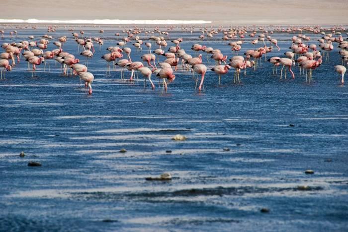 Flamingos (Toni Salado)