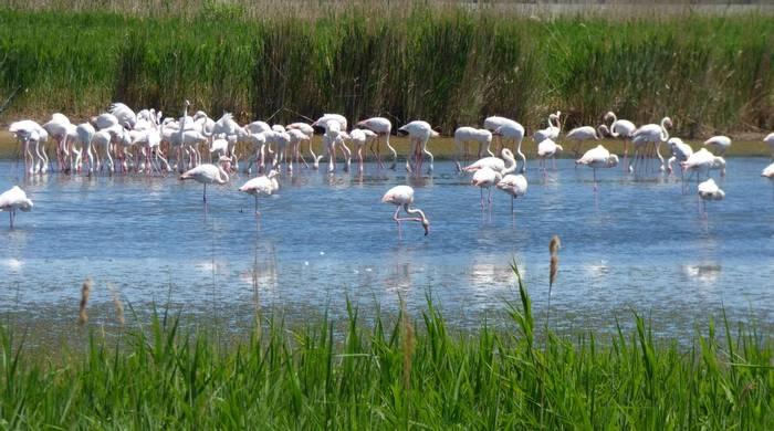 Flamingos (Deborah Hart)