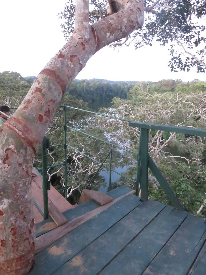 View of Soledad Lake from the canopy platform