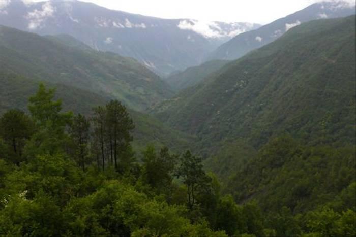 Cornus kousa, road to Daju, Yun (Phillipe de Spoelberch)