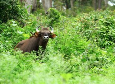 Nepal - A Wildlife Adventure