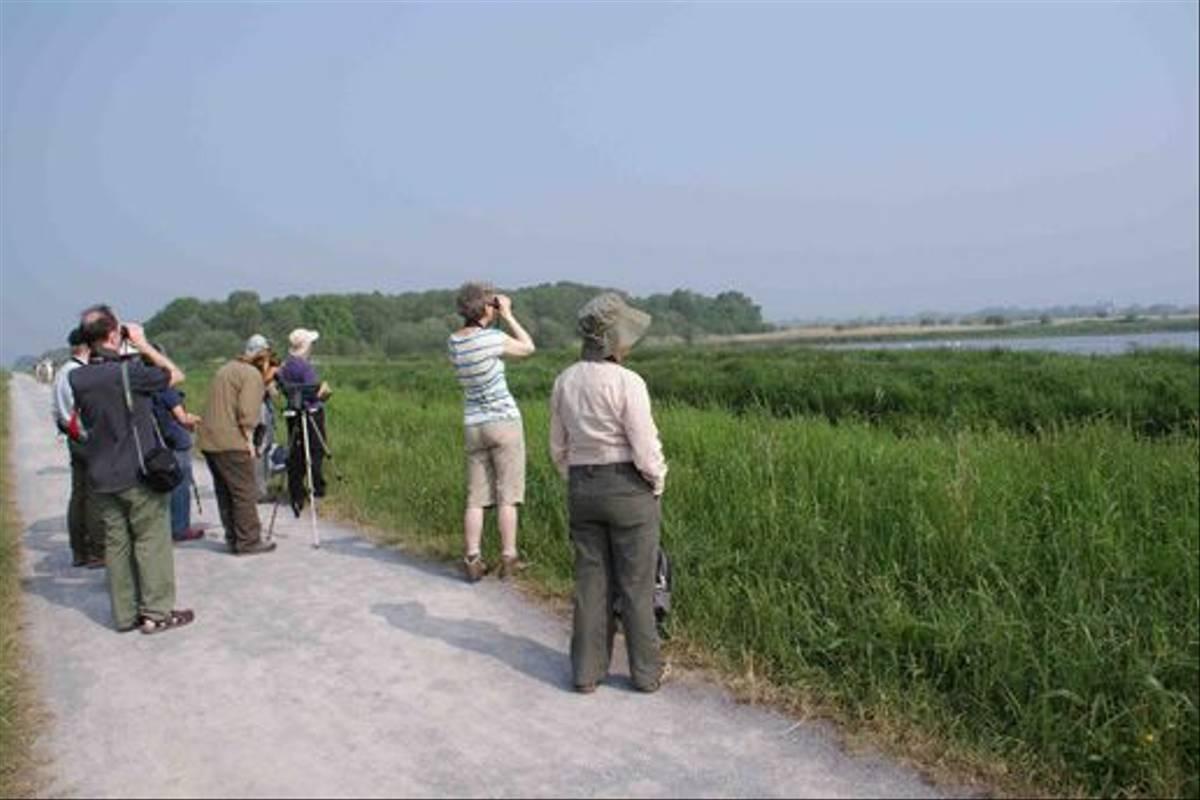 Naturetrek group looking for Great White Egret (Ed Drewitt)