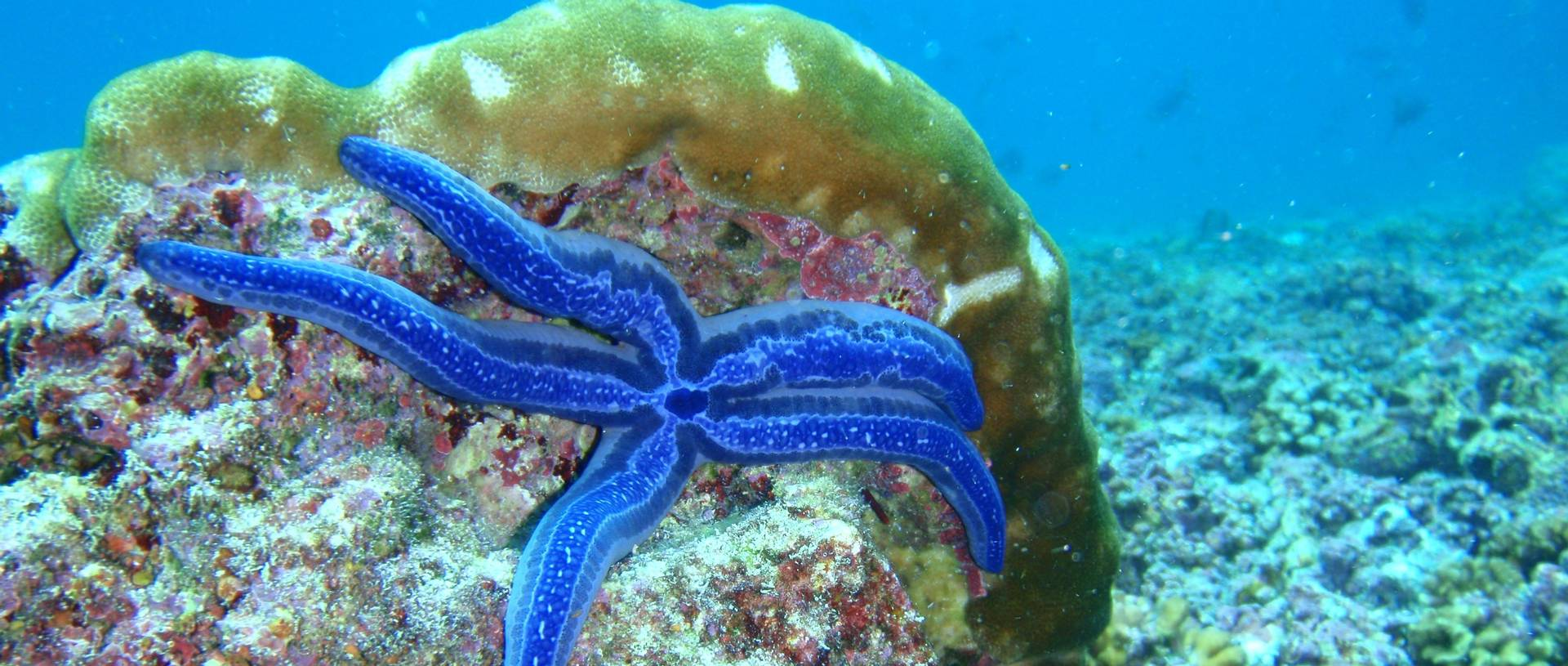 Starfish, Snorkelling, Galapagos